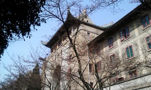 武漢大學櫻花