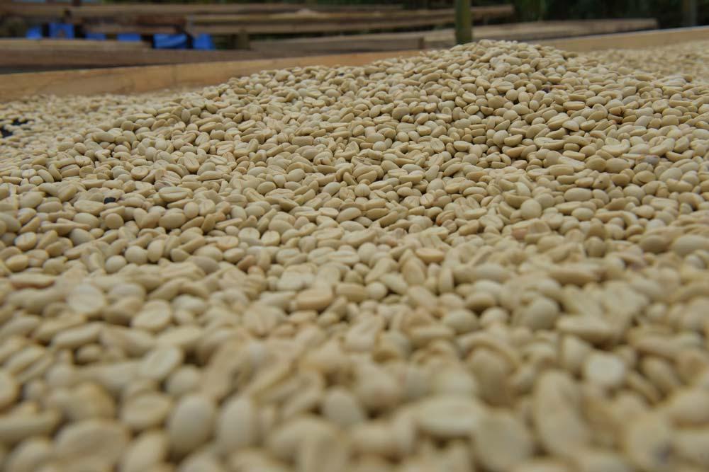 160705_coffee_5